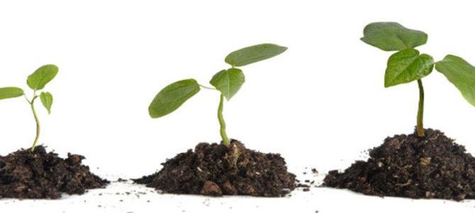 Lavoro per la crescita emotiva, cognitiva e relazionale dell'individuo