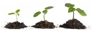 lavoro-per-la-crescita-emotiva-cognitiva-e-relazionale-dell-individuo